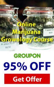 marihuana cannabis-course